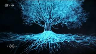 Terra X - Unsere Wälder Im Reich des Wassers
