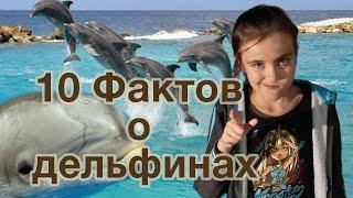 10 Интересных Фактов о Дельфинах для Детей Удивительные животные
