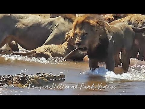 Most Amazing Animal Encounters and Wildlife Sightings of the Year Compilation | Wildest Africa