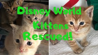 Rescued From Disney - Mom and Kittens - Plus Greedy Raccoons!