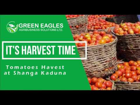 Hervesting time
