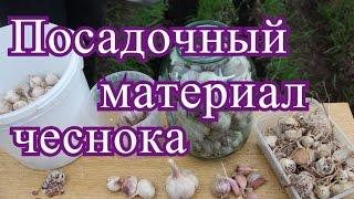 видео Посадочный материал. Многолетние и почвопокровные растения. Барвинок