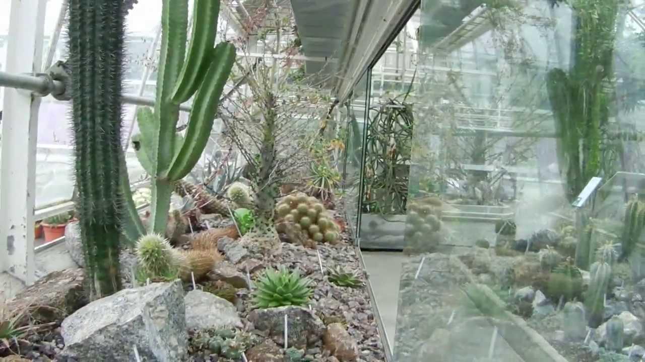 Sukkulenten Sammlung Zürich (Collection of succulents) YouTube ~ 15105120_Sukkulenten Sammlung Zürich Parkplatz