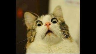 Самые Смешные Животные - Прикольное Видео   Смотреть Онлайн Смешные Ролики Животных