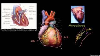 Kalp Hastalıkları ve Kalp Krizi (Sağlık: Çeşitli Konular)