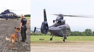 Hunde lernen fliegen: Hundeausbildung bei der Bundespolizei