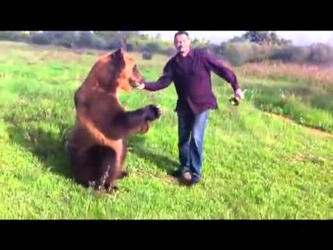 Russian bear \ HOME VERSION