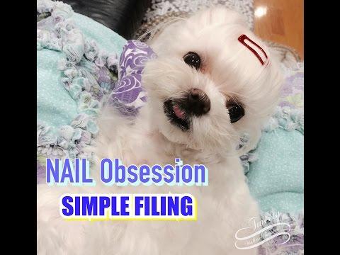 LAP GROOMING:   Using a Coarse Nail File to Shorten Tweety's Nails - Maltese Nail Filing말티즈미용
