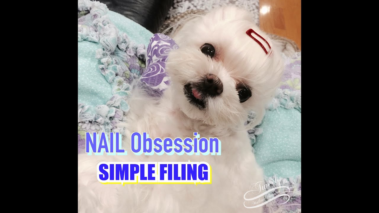 LAP GROOMING: Using a Coarse Nail File to Shorten Tweety\'s Nails ...