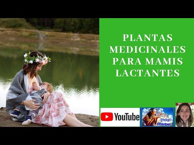 Medicina Natural para Mamis Lactantes