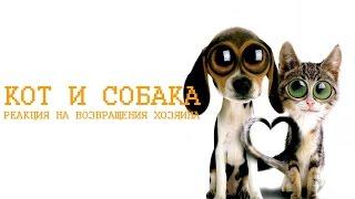 Кот и собака: реакция на возвращения хозяина