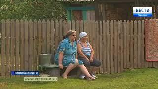 Животные в Приморье страдают от жары