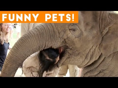 Funniest Pets & Animals of the Week Compilation July 2018   Hilarious Try Not to Laugh Animals Fail