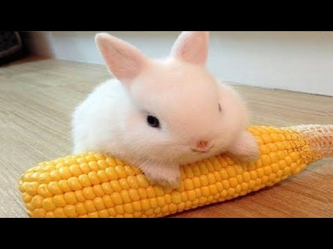 Funny and Cute Baby Bunny Rabbit Videos – Baby Animal Video Compilation (2019)