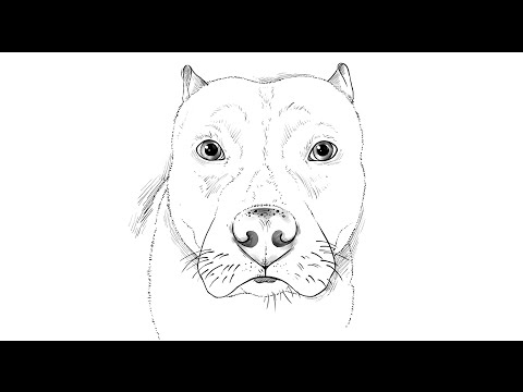 How to draw a Pitbull Dog
