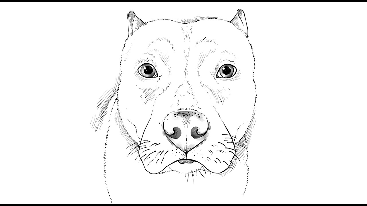Uncategorized How To Draw Pitbulls how to draw a pitbull dog youtube