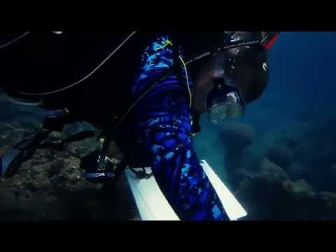 Diving at Folkstone Marine Park Barbados: Reef Survey