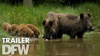 Wild trailer (2018)  | Nu verkrijgbaar op DVD & Blu-Ray