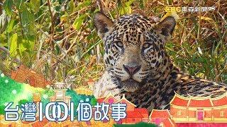 遠征地球最大濕地 揭開美洲豹消失秘密 Saving Jaguar: The king of the jungle part1 台灣1001個故事|白心儀
