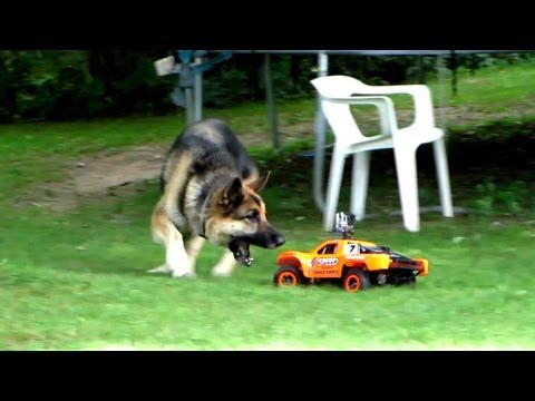 Thumbnail: Dog VS R/C Car - Fun with the Family!