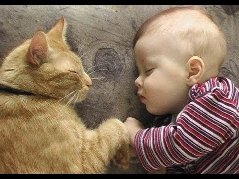'Cats Love Babies Compilation - PART 2' || CFS