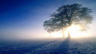 【輕音樂、早上最适合听的轻音乐】 Relaxing Piano Music & Bird Sound、Soothing Music、放鬆解壓、轻松的钢琴音乐、純鋼琴輕音樂、美妙的音樂、早晨音樂