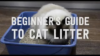 A Guide to Cat Litter in Australia // Review of The 5 Common Materials
