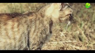 Кошачий полдень