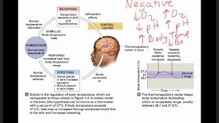 Ch 1 Homeostasis, Negative Feedback, and Positive Feedback.mp4