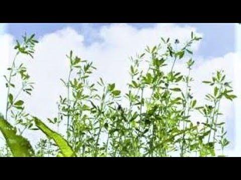 Вопрос: Какие дикорастущие растения заготовить для зимнего букета?