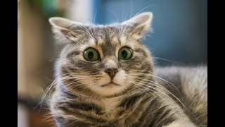Веселые котики и милые котята | Подборка видео приколов с котами #2