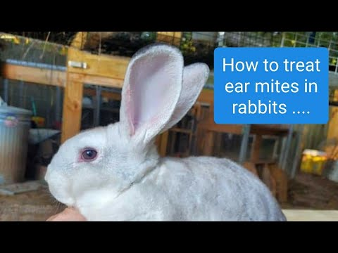 Treating Ear Mites In Rabbits