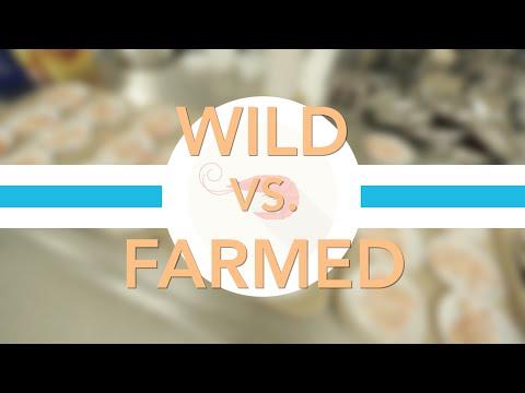 Farmed vs. Wild Shrimp: Which Tastes Better? | Consumer Reports