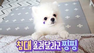 침대 올려달라 찡찡거리는 강아지 🐶 옹알옹알 열심히 재잘거려요 🐥 투머치토커 행성이