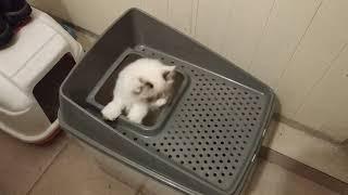 Новый туалет для кошек / try new cat litter