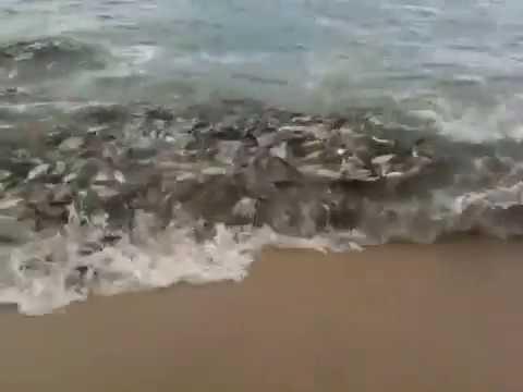 Fish Feeding Frenzy - Los Barriles