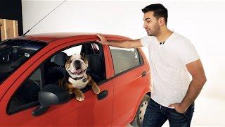 Animals and Cars - SellAnyCar.com ad