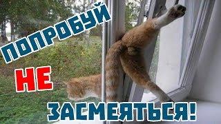 ПРИКОЛЫ С КОТАМИ 2018. приколы с котами с озвучкой на русском языке. смеяться до слез.