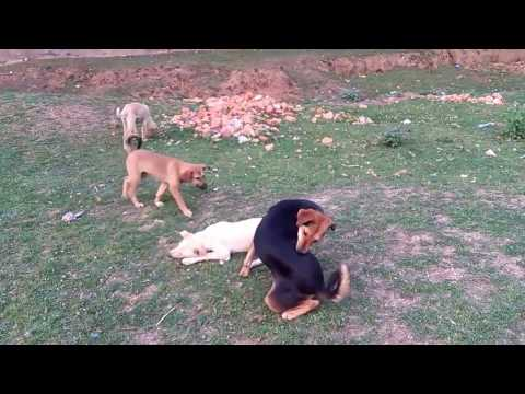 Dog family having fun time | Mum playing with her puppies | So cute
