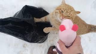 Кот говорит ЖРАТЬ ДАВАЙ! На Х... мне игрушки ))
