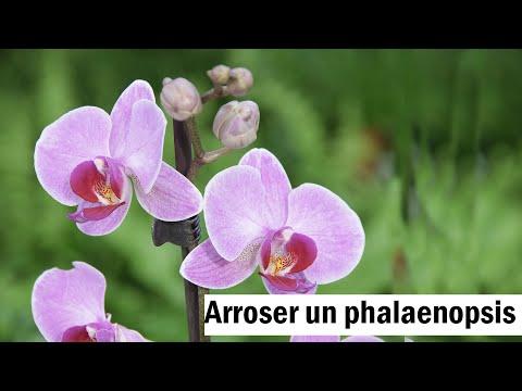 phalaenopsis le bon arrosage youtube. Black Bedroom Furniture Sets. Home Design Ideas