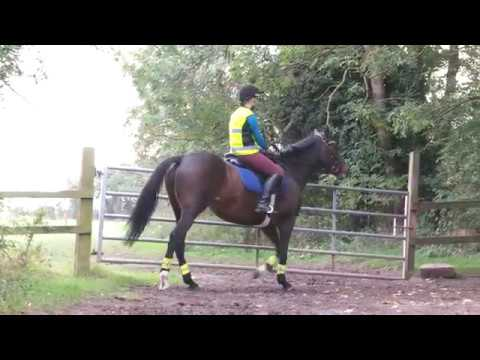 Top tips for hacking with your horse | Your Horse