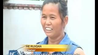 В Китае родился поросенок с тремя глазами и двумя пятачками
