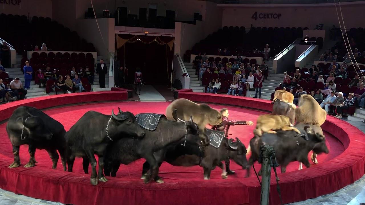 все фото цирка медведи на буйволах права