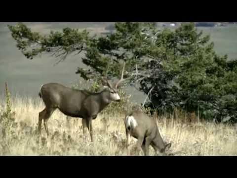 Anadarko: Wyoming Wildlife Study