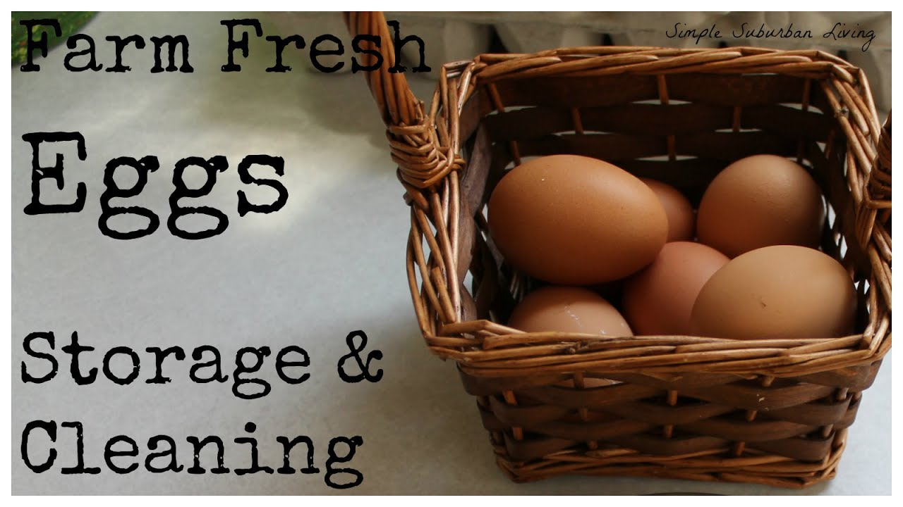 Farm Fresh Eggs - Storage and Cleaning - YouTube