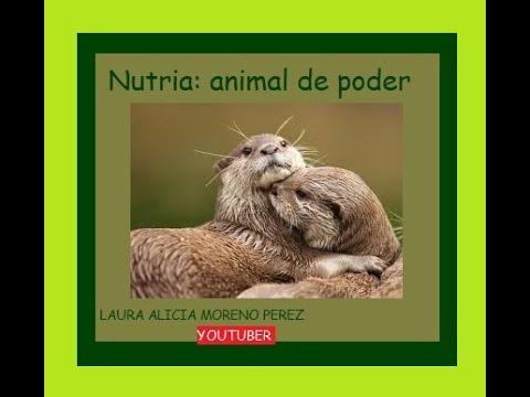 Nutria: Animal De Poder