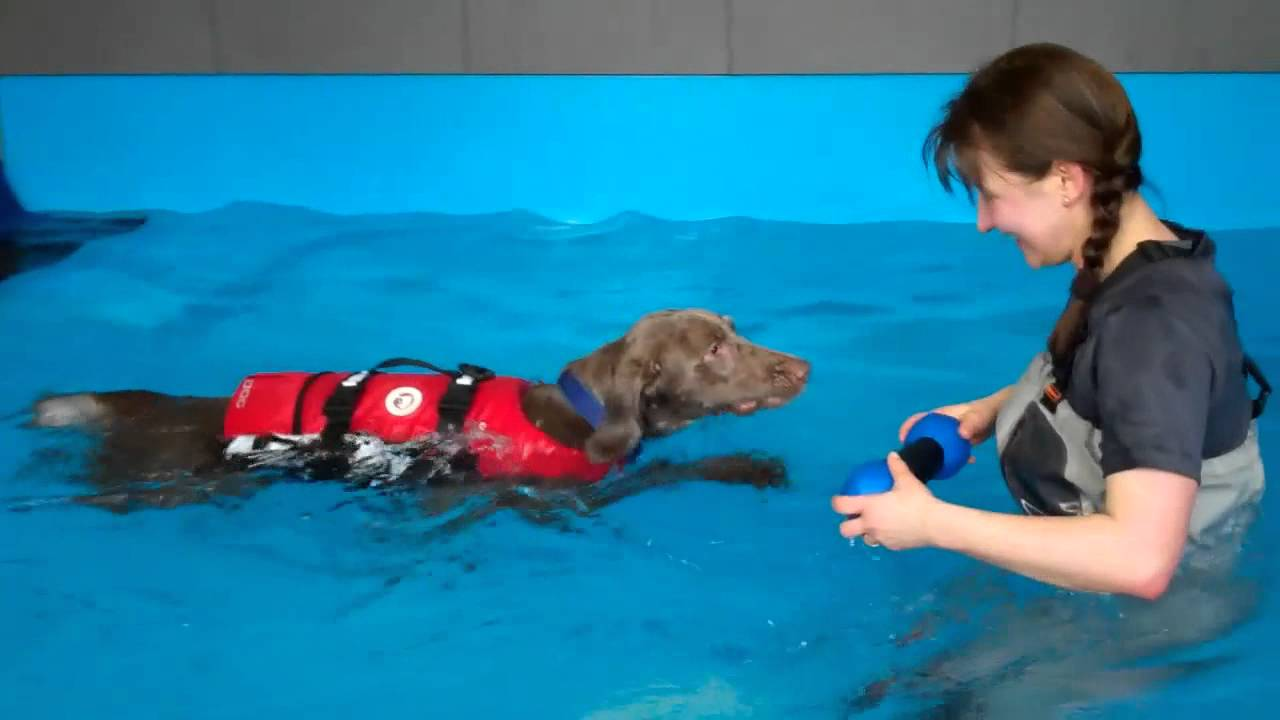 Hundeschwimmbad Hanau