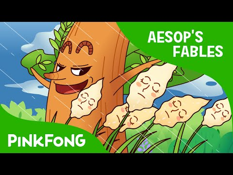 The Oak and the Reed | Aesop's Fables | PINKFONG Story Time for Children