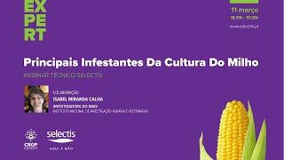 Webinar Principais Infestantes da cultura do Milho - 11 de Março 18:30h